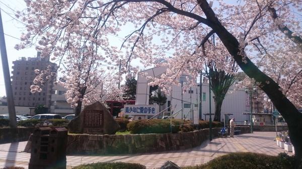 犬山 ホテル 桜 満開